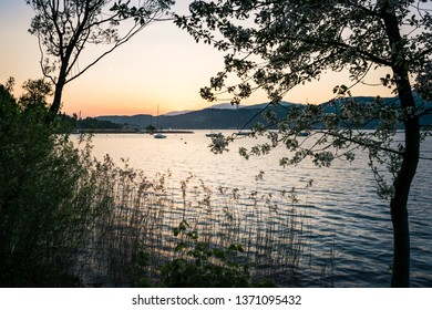 Sunset at lake woerth with a flowering tree and reed in the foreground and some sailing boats in the background. Austria, klagenfurt, wörthersee, teixlbucht
