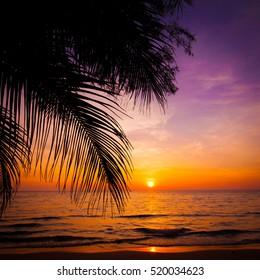 sunset landscape. beach sunset.  sunset on the beach