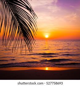 sunset landscape. beach sunset.  sunset on the beach.