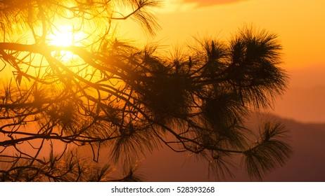 Sunset landscape beautiful orange background,Silhouette