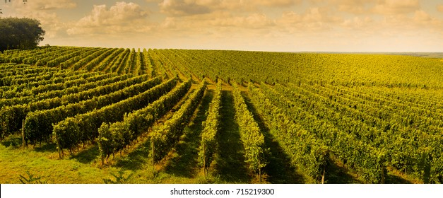Sunset, Landscape, Bordeaux Wineyard, France, 2017