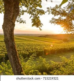 Sunset, Landscape, Bordeaux Wineyard, France, 2017