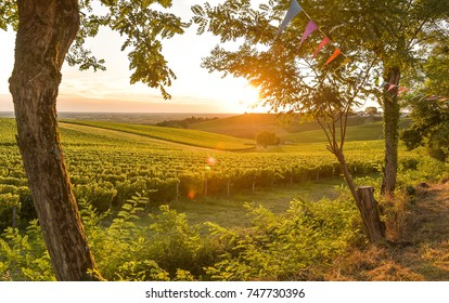 Sunset landscape bordeaux wineyard france, europe