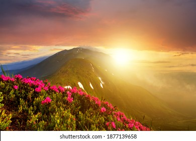 Sunset landscape with green grass meadow, red blooming flowers, high peaks and foggy valley under vibrant colorful evening sky in rocky mountains.