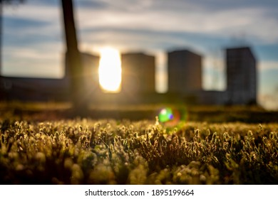 sunset landscape Modern buildings out of focus with grass in front