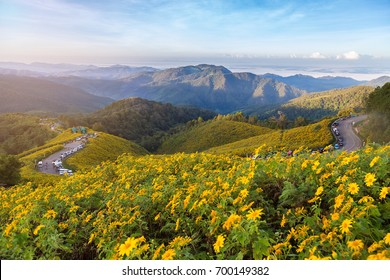 Sunset Landscape nature flower Tung Bua Tong Mexican sunflower field ,Mae Hong Son,Thailand.