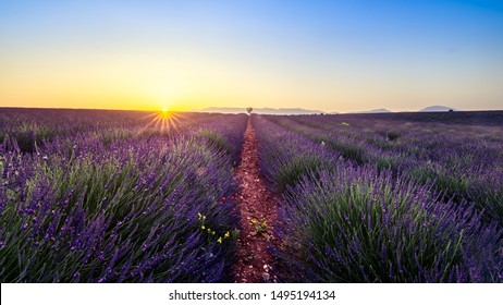 Sunset landscape over lavanda field in french provence area