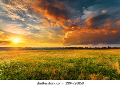 Sunset landscape with a plain wild grass field and a forest on background.