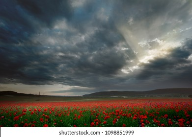 Sunset landscape - poppy field in the background of a stormy sky with rays of the sun - Crimea, Turgenevka