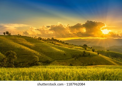sunset landscape view at green terraced rice field in Pa Pong Piang , Mae Chaem, Chiang Mai, Thailand .