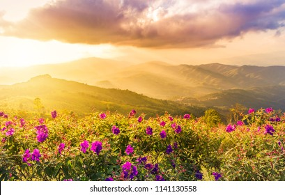 sunset landscape view at mountains at doi chang mup Chiangrai,nothern Thailand selective focus at pink impatiens balsamina flowers