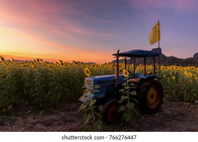 Sunset landscape view of Tracktor in sunflower field with mountain background