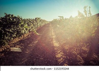 Sunset, Landscape, Wineyard, catalunya, spain, penedes