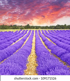 Sunset in a lavender field