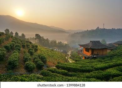 Sunset at Lee wine Rak Thai,Ban Rak Thai a Chinese settlement, Mae Hong Son, Thailand November 4, 2016