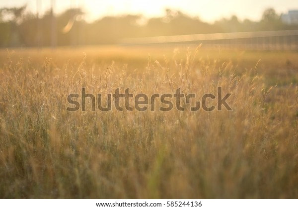 Sunset light of the day in the field.