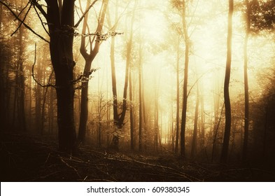 sunset light in fantasy woods scenery