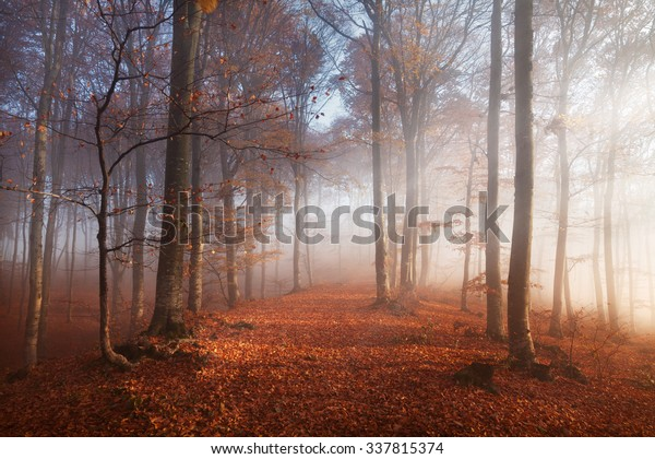 Sunset light in the misty autumn forest