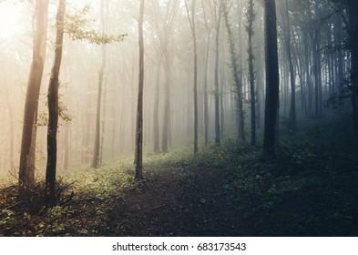 sunset light in misty dark forest