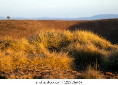 Sunset light on spinifex clumps, Stokes Hill Lookout, Flinders' Ranges, SA, Australia