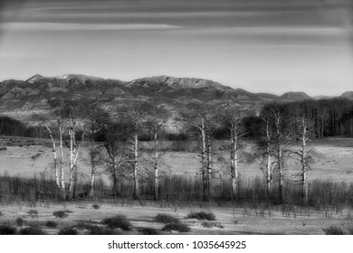 Sunset lights up a grove of leafless aspens in the Boulder mountains Utah.