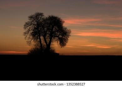 Sunset and linden trees near Hrubieszow