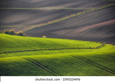 Sunset lines and waves with trees in the spring, South Moravia, Czech Republic