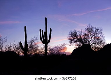 Sunset lit red clouds, and Saguaro silhouette.