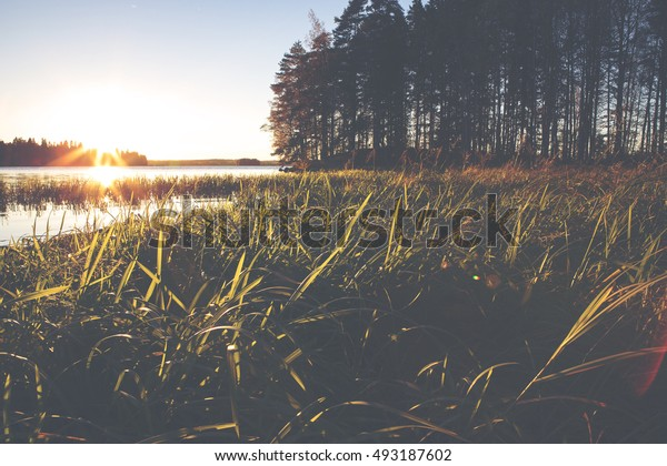 Sunset at the low point of view. Grass in the front. Forest in the background out of focus. Image has a flare and vintage effect added.