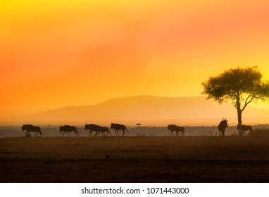 Sunset in Mara: silhouettes