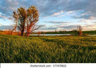 Sunset meadow