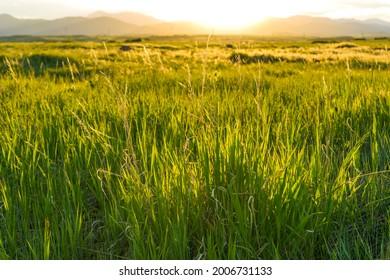 Sunset Meadow - Spring sunset at a mountain meadow. South Table Mountain Park, Denver-Golden-Lakewood, Colorado, USA.