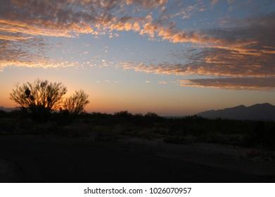 Sunset with Mesquite tree silhouette in near Tuscon Arizona