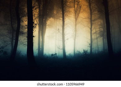 sunset in misty forest in autumn