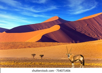 Sunset in most ancient in the world Namib Desert. Oryx standing at the road. Travel to Namibia, South Africa. The concept of extreme and exotic tourism