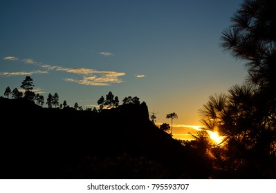 Sunset in the mountain, pines and blue sky, natural reserve of Pilancones, Gran canaria