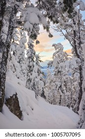 Sunset in a mountain valley through snow covered trees in winter