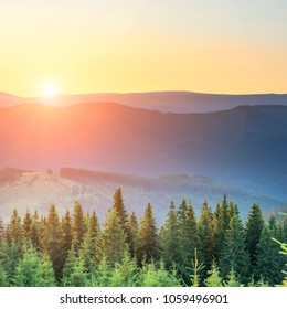Sunset in the mountains with forest and big shining sun