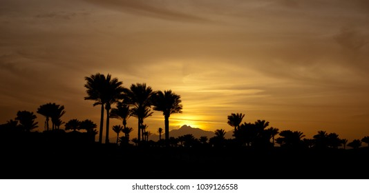 Sunset in mountings with palms. Winter evening with palms. Yellow sun down and sky.