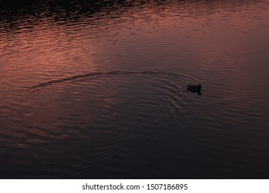 Sunset night red river duck