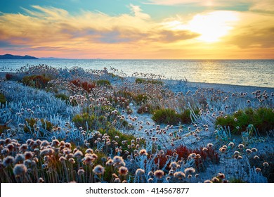 Sunset at north beach of Sardinia - Italy / Flowers on Dunes on island / meditation mood at beach