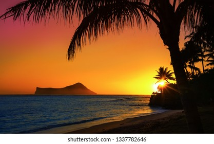 Sunset in Oahu with ocean and palm trees