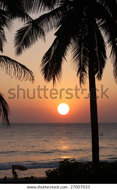 sunset at the ocean and palm tree