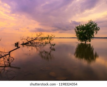 Sunset at the ocean with trees reflected in the calm surface of the sea, Thailand