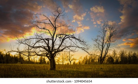 Sunset in an old apple orchard at Lake Placid, the Adirondacks, New York