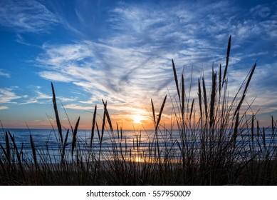 Sunset on atlantic ocean, beach grass silhouette in Lacanau France