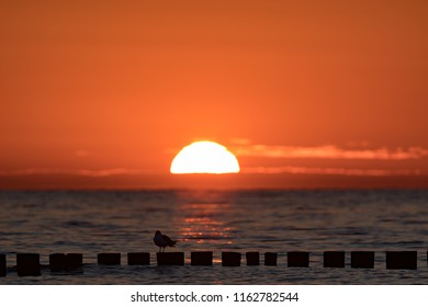 Sunset on the Baltic Sea with seagull on groynes