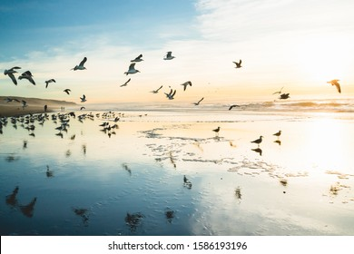Sunset on the beach and flock of birds flying over the sea