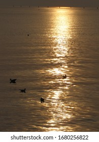 sunset on the beach in Grado with seagulls