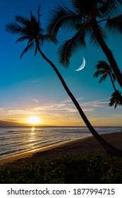 sunset on beach with palm trees and moon